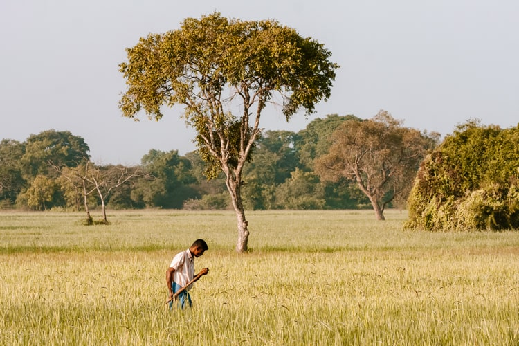 Farming Sri Lanka