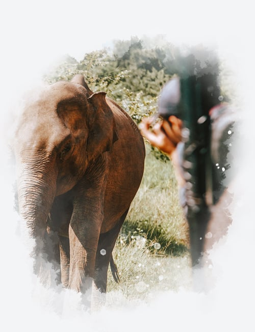 Sri Lanka in 3 weeks