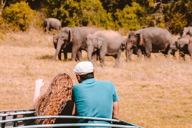 Elephant watching in Minneriya