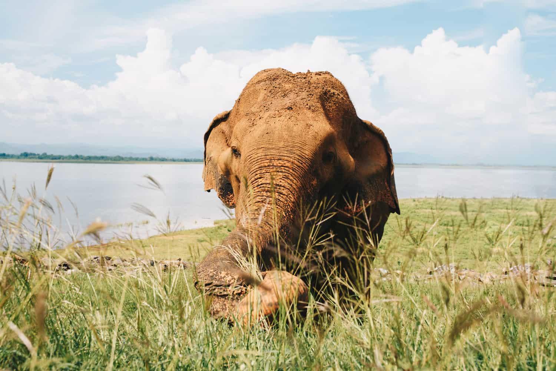 Elephant in Udawalawe national park